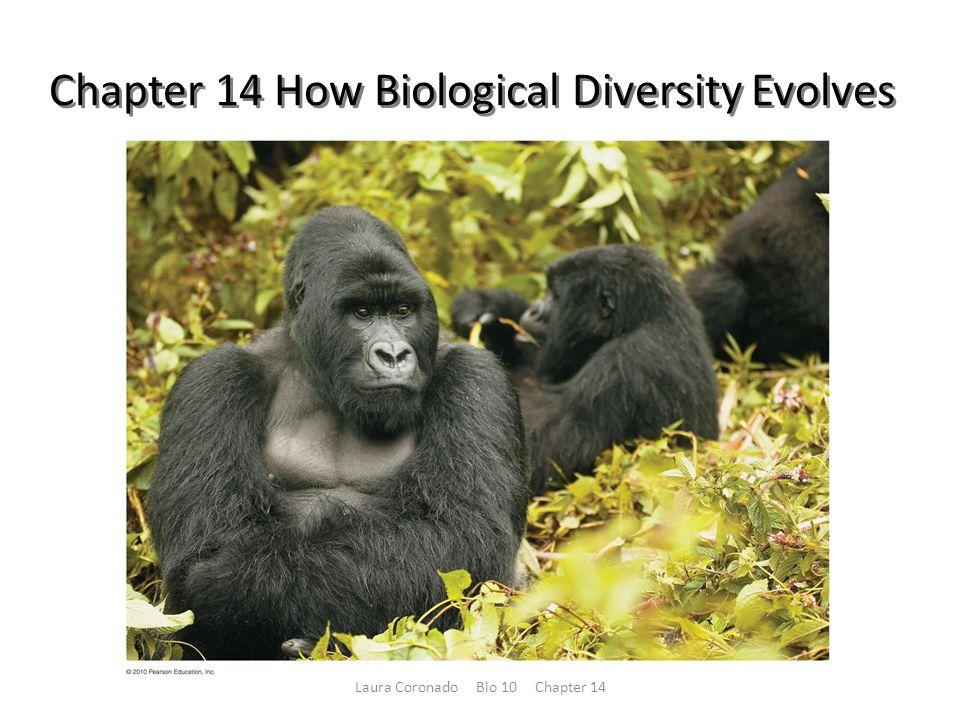 Chapter 14 How Biological Diversity Evolves Laura Coronado Bio 10 Chapter 14
