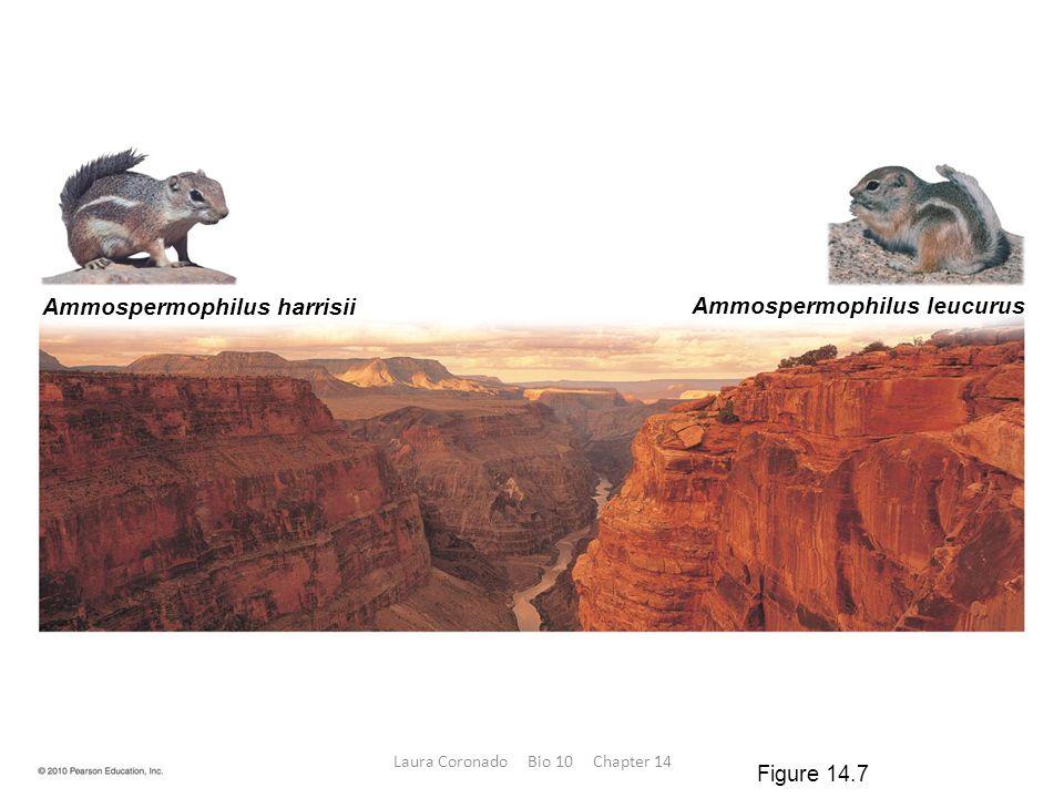 Ammospermophilus harrisii Ammospermophilus leucurus Figure 14.7 Laura Coronado Bio 10 Chapter 14