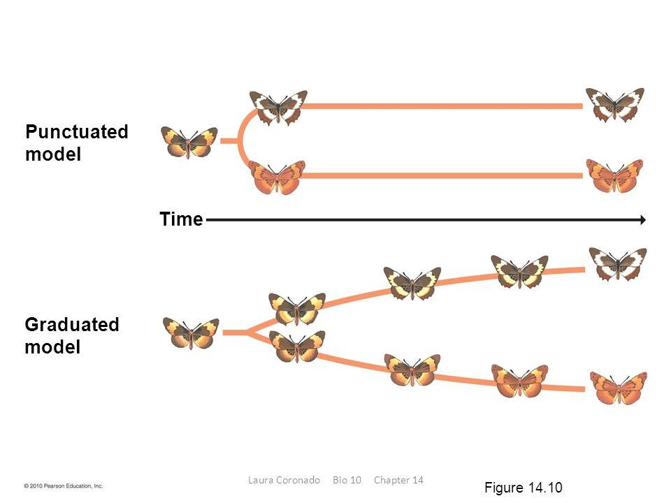 Punctuated model Graduated model Time Figure 14.10 Laura Coronado Bio 10 Chapter 14