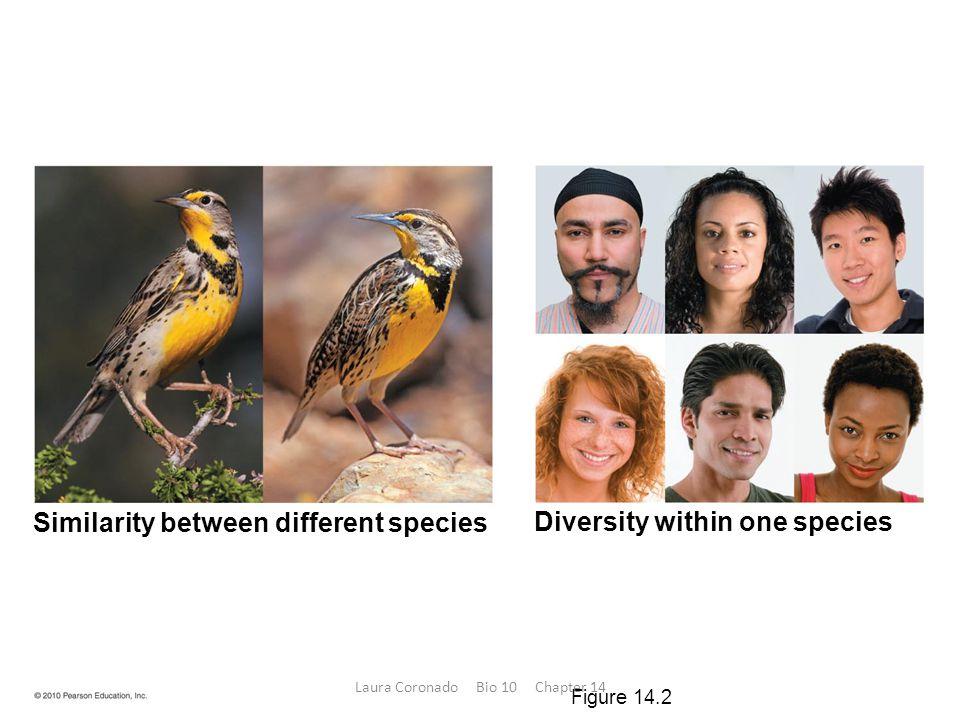 Diversity within one species Similarity between different species Figure 14.2 Laura Coronado Bio 10 Chapter 14