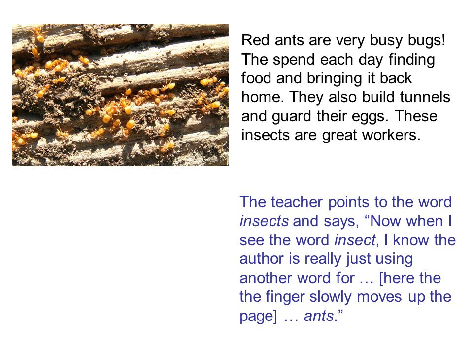 The teacher points to the word insects and says, Now when I see the word insect, I know the author is really just using another word for … [here the the finger slowly moves up the page] … ants.