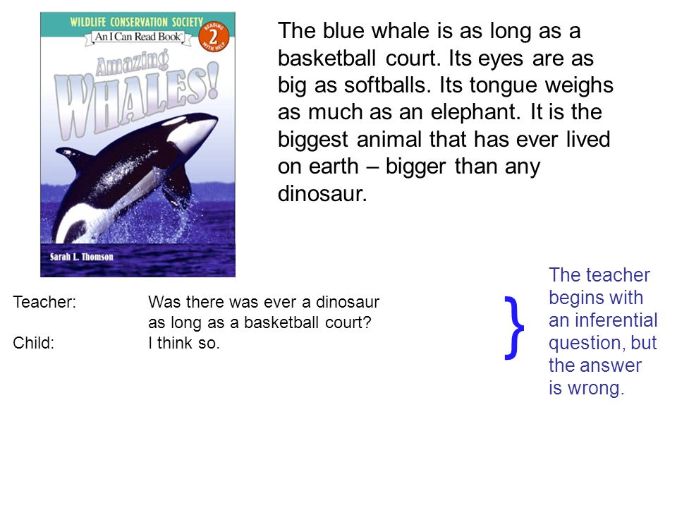 The blue whale is as long as a basketball court. Its eyes are as big as softballs.