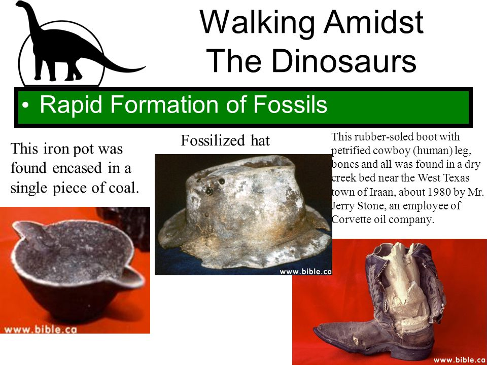 Walking Amidst The Dinosaurs Rapid Formation of Fossils This iron pot was found encased in a single piece of coal. Fossilized hat This rubber-soled bo
