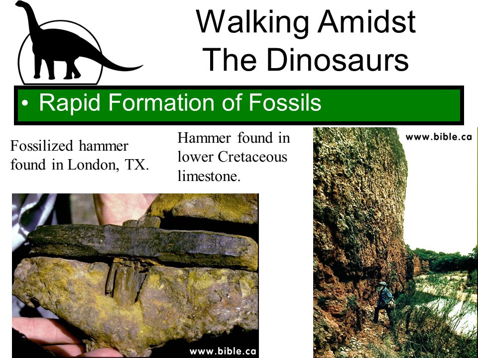 Walking Amidst The Dinosaurs Rapid Formation of Fossils Fossilized hammer found in London, TX. Hammer found in lower Cretaceous limestone.
