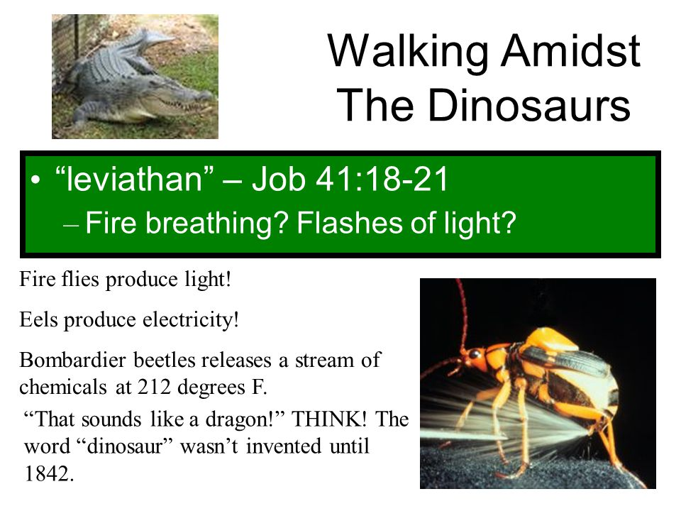 """Walking Amidst The Dinosaurs """"leviathan"""" – Job 41:18-21 – Fire breathing? Flashes of light? Fire flies produce light! Eels produce electricity! Bombar"""