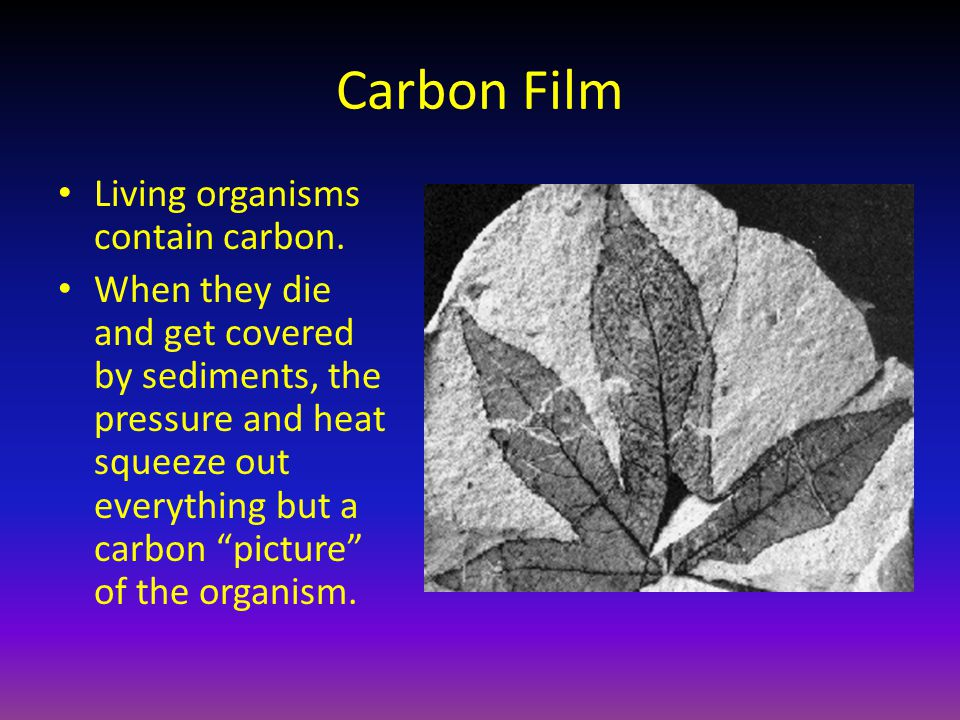 """Carbon Film Living organisms contain carbon. When they die and get covered by sediments, the pressure and heat squeeze out everything but a carbon """"pi"""