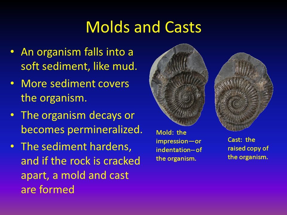 Molds and Casts An organism falls into a soft sediment, like mud. More sediment covers the organism. The organism decays or becomes permineralized. Th
