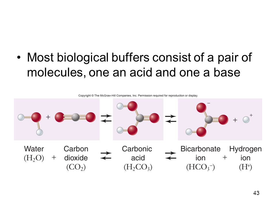 43 Most biological buffers consist of a pair of molecules, one an acid and one a base