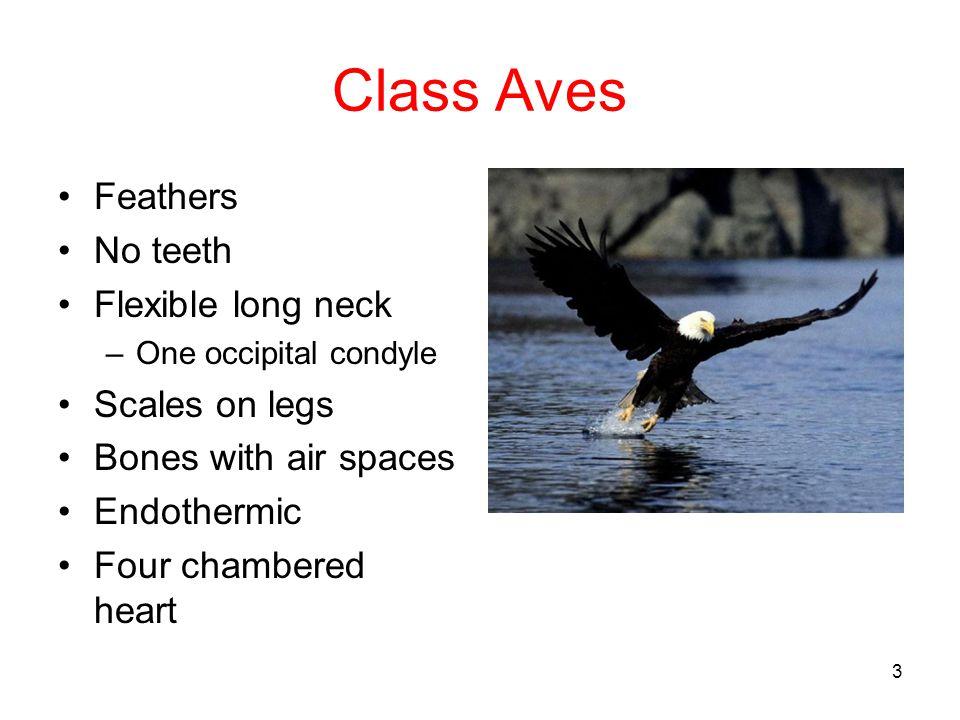 53 Order Falconiformes Hooked bill Talons Eagle Hawk Falcon