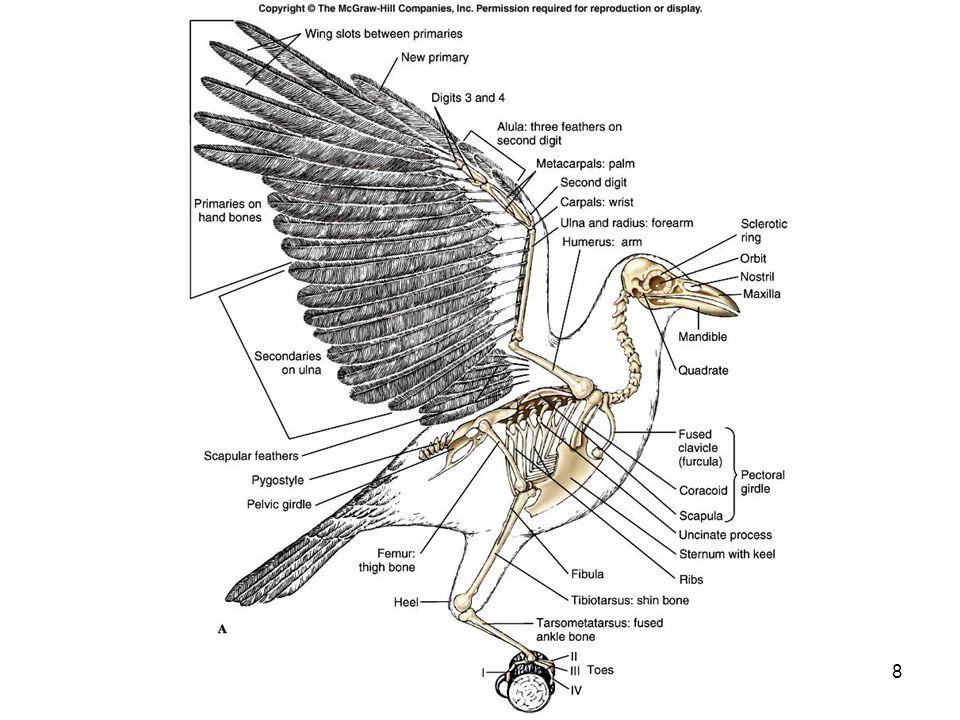 48 Bird Classification 28 orders 9600 species