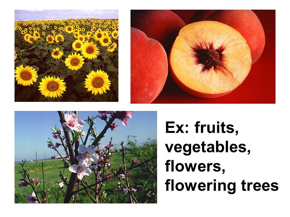 Ex: fruits, vegetables, flowers, flowering trees