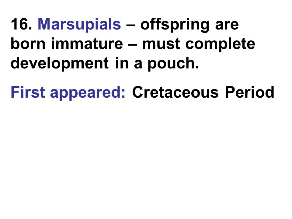 16. Marsupials – offspring are born immature – must complete development in a pouch. First appeared: Cretaceous Period