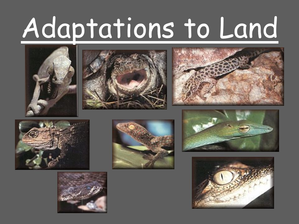 Adaptations to Land