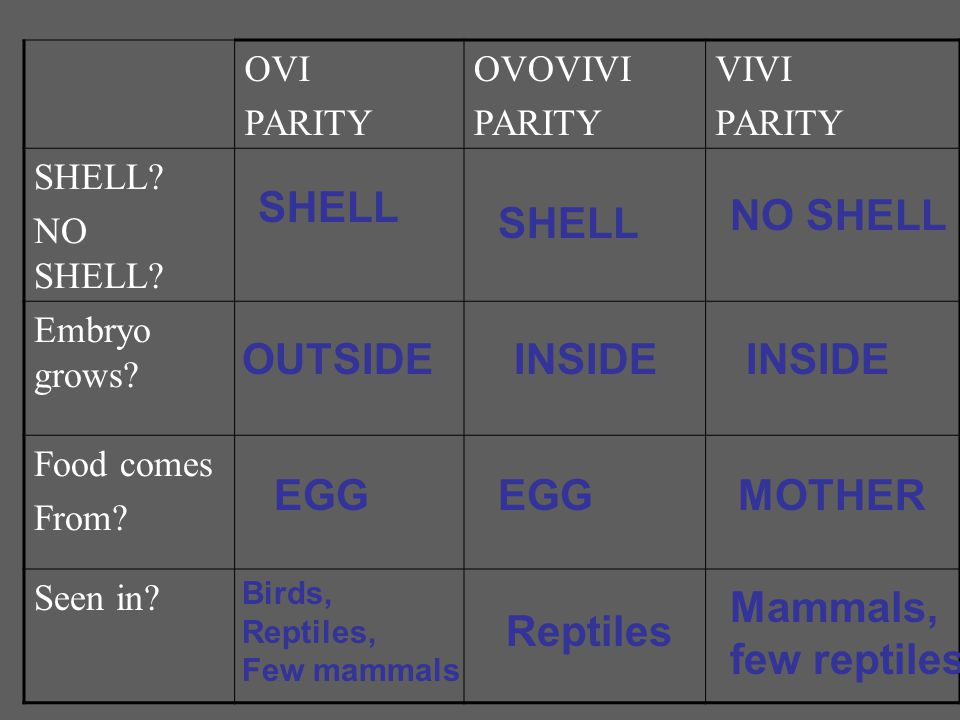 OVI PARITY OVOVIVI PARITY VIVI PARITY SHELL? NO SHELL? Embryo grows? Food comes From? Seen in? SHELL OUTSIDE EGG Birds, Reptiles, Few mammals NO SHELL