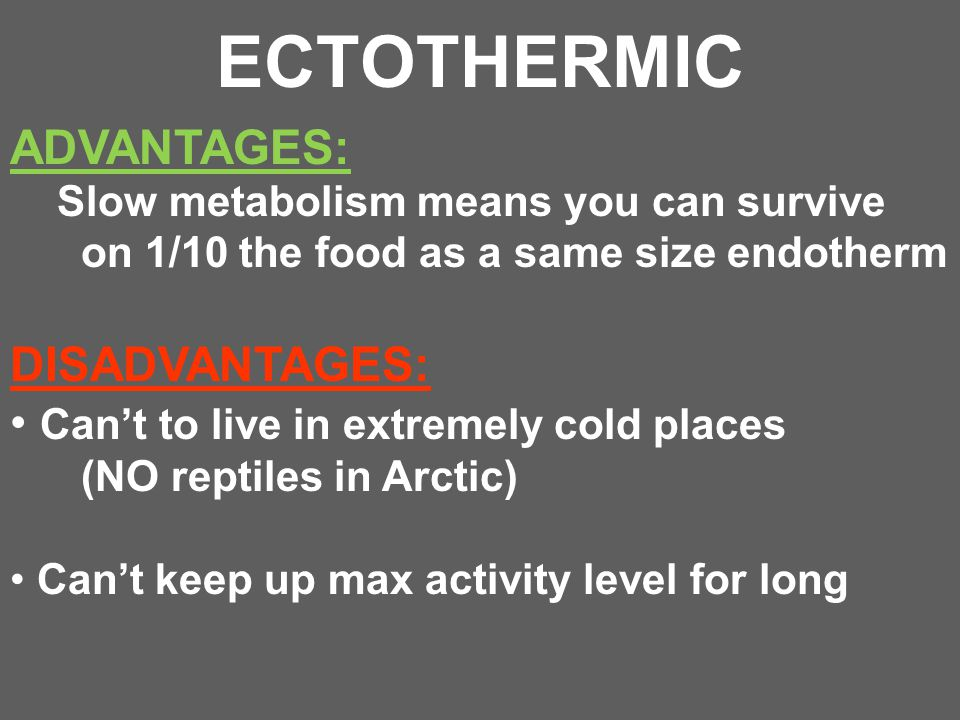 ECTOTHERMIC ADVANTAGES: Slow metabolism means you can survive on 1/10 the food as a same size endotherm DISADVANTAGES: Can't to live in extremely cold
