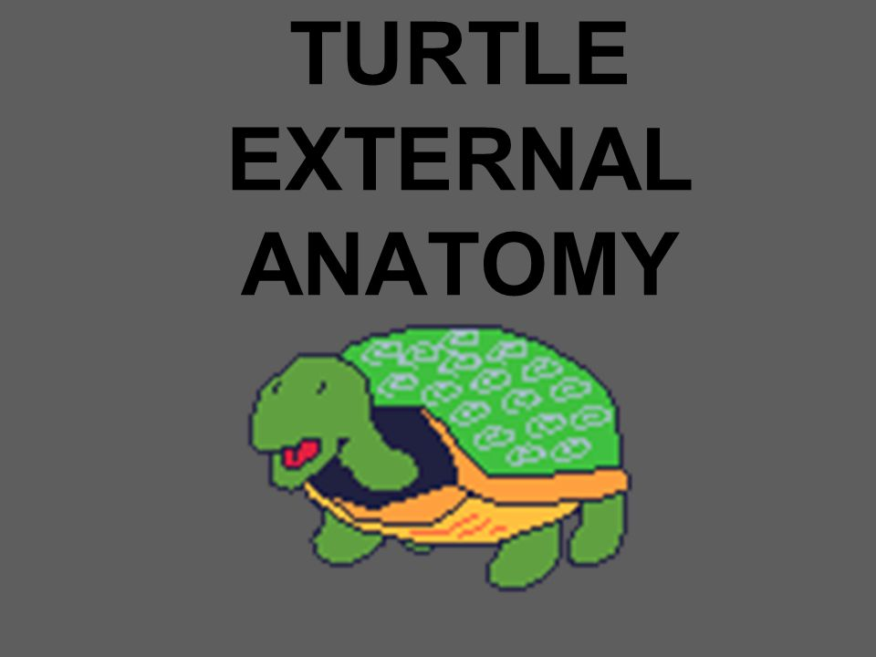 TURTLE EXTERNAL ANATOMY