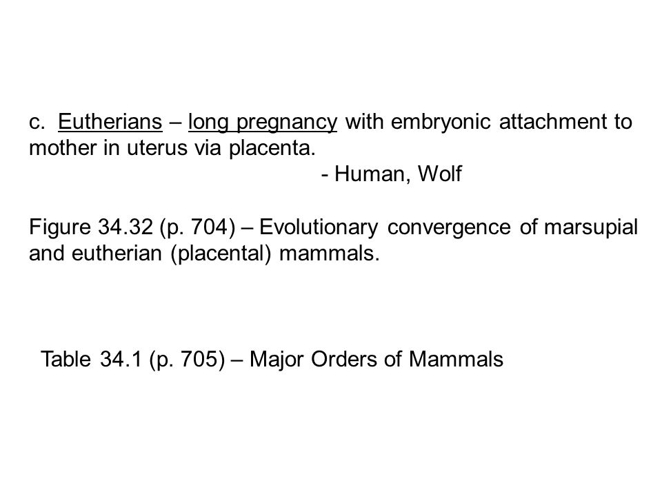 c. Eutherians – long pregnancy with embryonic attachment to mother in uterus via placenta. - Human, Wolf Figure 34.32 (p. 704) – Evolutionary converge