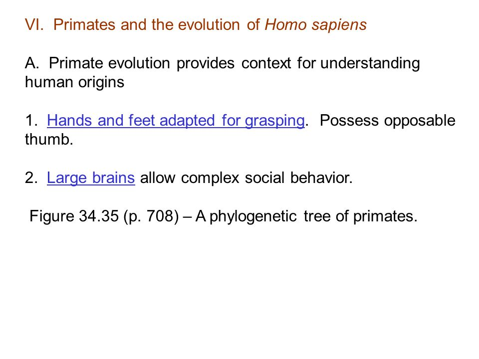VI. Primates and the evolution of Homo sapiens A. Primate evolution provides context for understanding human origins 1. Hands and feet adapted for gra