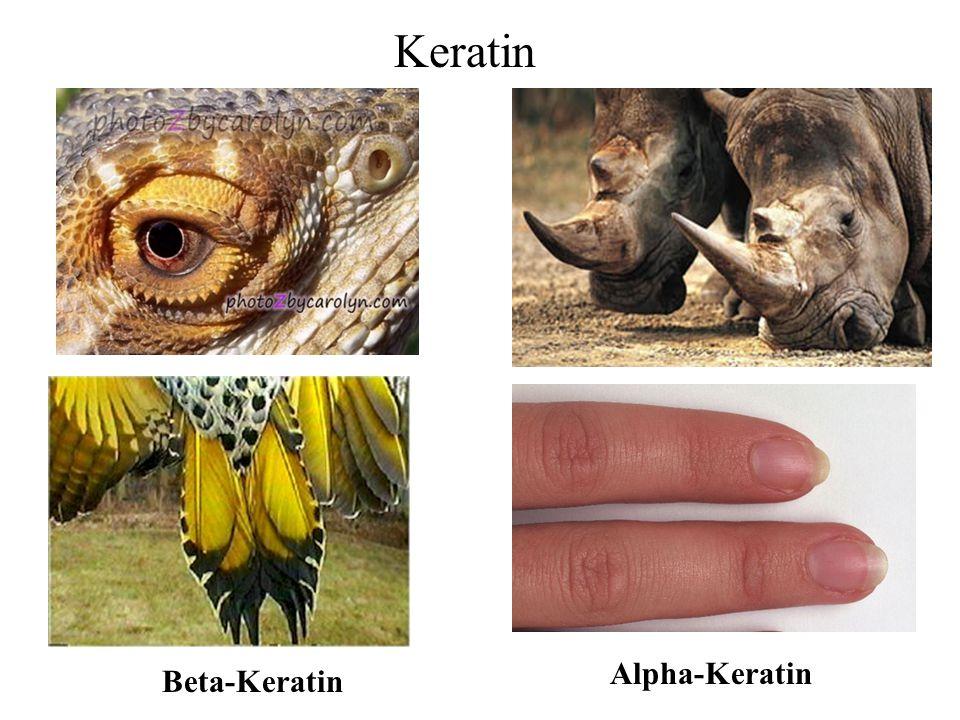 Keratin Beta-Keratin Alpha-Keratin