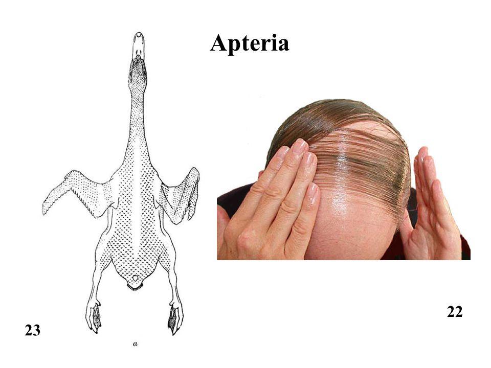 22 23 Apteria