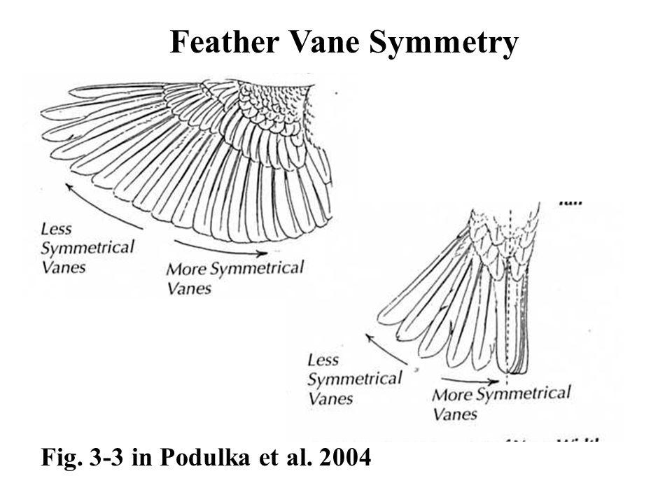 Fig. 3-3 in Podulka et al. 2004 Feather Vane Symmetry