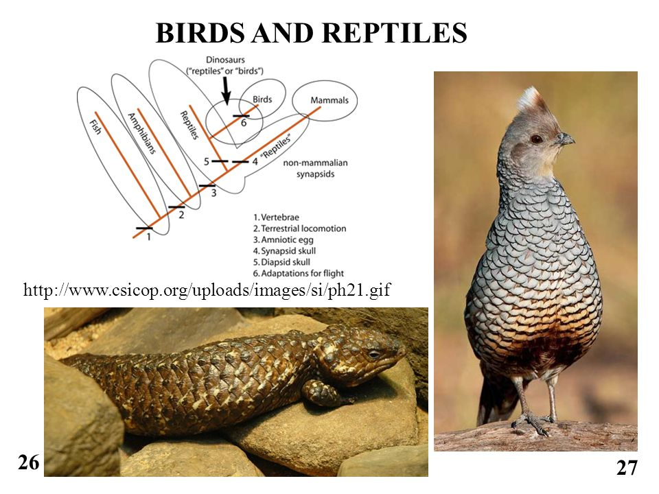 26 27 BIRDS AND REPTILES http://www.csicop.org/uploads/images/si/ph21.gif