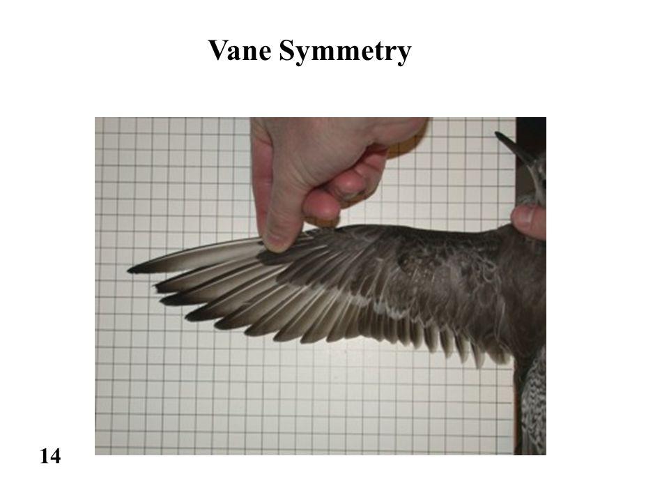 14 Vane Symmetry