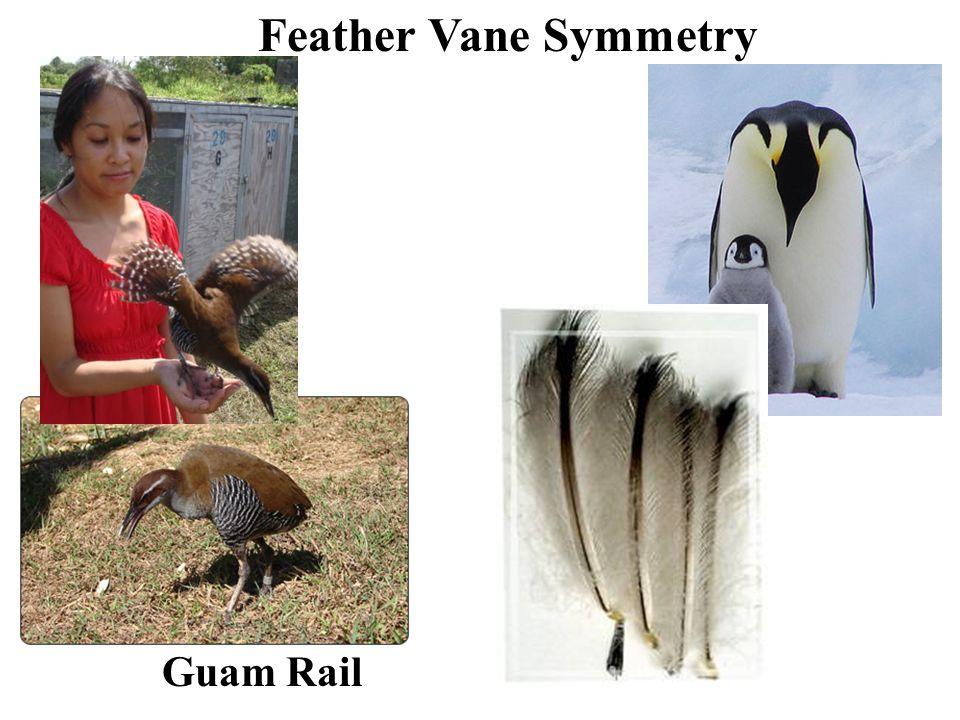 Feather Vane Symmetry Guam Rail