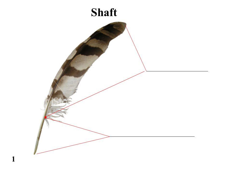 1 Shaft