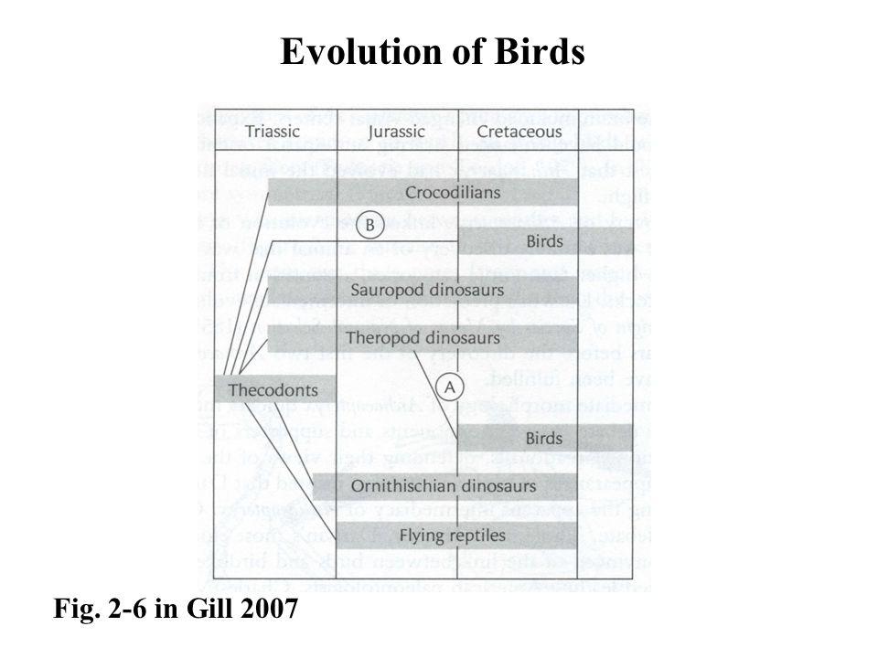 Evolution of Birds Fig. 2-6 in Gill 2007