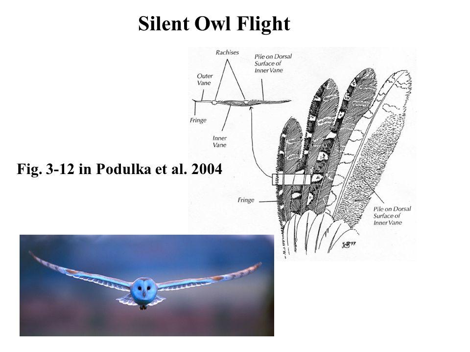 Silent Owl Flight Fig. 3-12 in Podulka et al. 2004