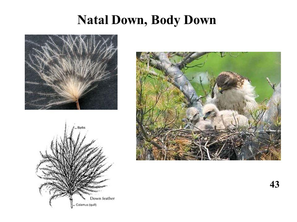 43 Natal Down, Body Down