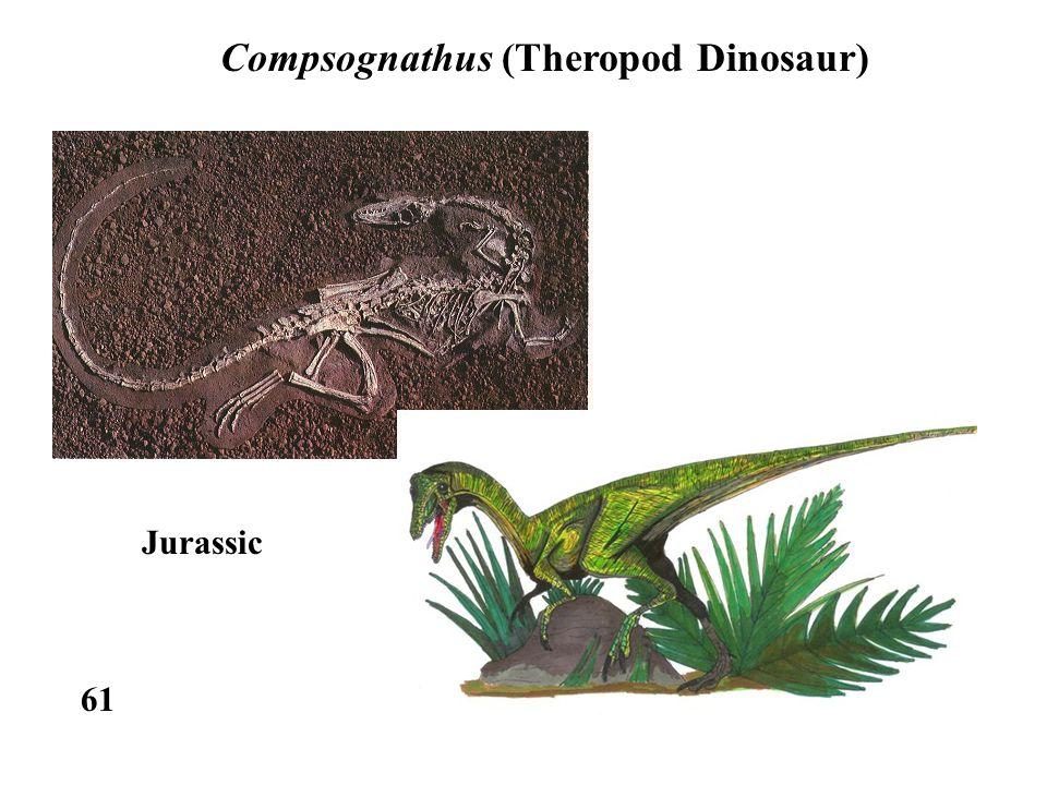 61 Compsognathus (Theropod Dinosaur) Jurassic