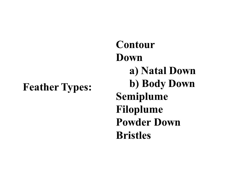 Feather Types: Contour Down a) Natal Down b) Body Down Semiplume Filoplume Powder Down Bristles