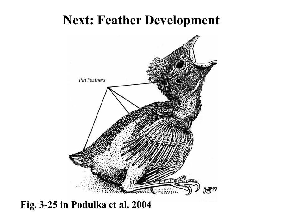 Next: Feather Development Fig. 3-25 in Podulka et al. 2004