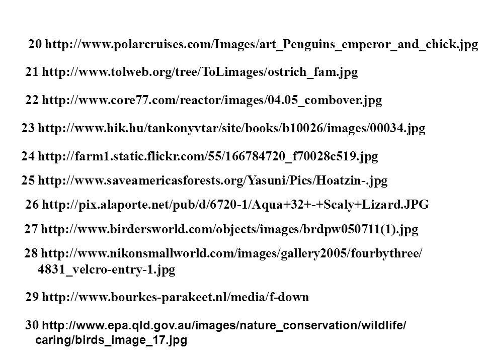 21 http://www.tolweb.org/tree/ToLimages/ostrich_fam.jpg 20 http://www.polarcruises.com/Images/art_Penguins_emperor_and_chick.jpg 22 http://www.core77.com/reactor/images/04.05_combover.jpg 23 http://www.hik.hu/tankonyvtar/site/books/b10026/images/00034.jpg 24 http://farm1.static.flickr.com/55/166784720_f70028c519.jpg 25 http://www.saveamericasforests.org/Yasuni/Pics/Hoatzin-.jpg 26 http://pix.alaporte.net/pub/d/6720-1/Aqua+32+-+Scaly+Lizard.JPG 27 http://www.birdersworld.com/objects/images/brdpw050711(1).jpg 28 http://www.nikonsmallworld.com/images/gallery2005/fourbythree/ 4831_velcro-entry-1.jpg 29 http://www.bourkes-parakeet.nl/media/f-down 30 http://www.epa.qld.gov.au/images/nature_conservation/wildlife/ caring/birds_image_17.jpg