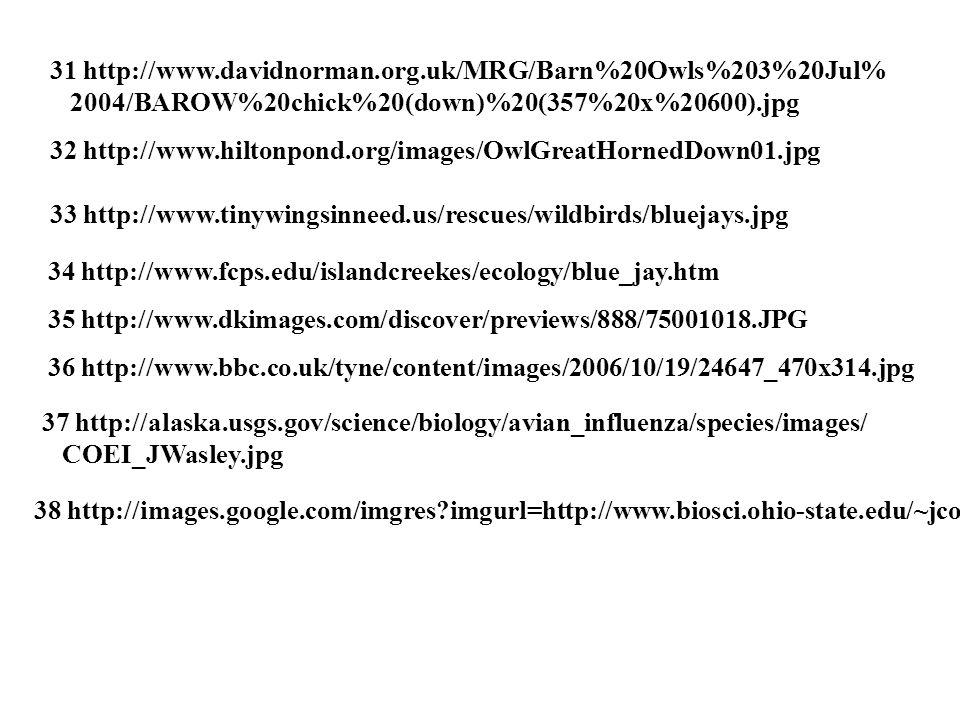 31 http://www.davidnorman.org.uk/MRG/Barn%20Owls%203%20Jul% 2004/BAROW%20chick%20(down)%20(357%20x%20600).jpg 32 http://www.hiltonpond.org/images/OwlGreatHornedDown01.jpg 33 http://www.tinywingsinneed.us/rescues/wildbirds/bluejays.jpg 34 http://www.fcps.edu/islandcreekes/ecology/blue_jay.htm 35 http://www.dkimages.com/discover/previews/888/75001018.JPG 36 http://www.bbc.co.uk/tyne/content/images/2006/10/19/24647_470x314.jpg 37 http://alaska.usgs.gov/science/biology/avian_influenza/species/images/ COEI_JWasley.jpg 38 http://images.google.com/imgres imgurl=http://www.biosci.ohio-state.edu/~jcondit/images/class_images/feathers/down_feather200.jpg&imgrefurl=http://www.biosci.ohio-state.edu/~jcondit/current/feathers/feathers_main.htm&h=167&w=200&sz=3&hl=en&start=62&um=1&tbnid=-7T9FyzzU2d4NM:&tbnh=87&tbnw=104&prev=/images%3Fq%3Ddown%2Bfeathers%26start%3D60%26ndsp%3D20%26svnum%3D10%26um%3D1%26hl%3Den%26safe%3Dactive%26rls%3DGGLR,GGLR:2006-17,GGLR:en%26sa%3DN