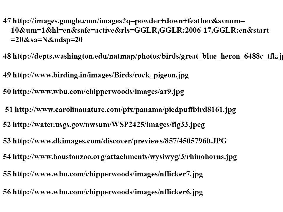47 http://images.google.com/images q=powder+down+feather&svnum= 10&um=1&hl=en&safe=active&rls=GGLR,GGLR:2006-17,GGLR:en&start =20&sa=N&ndsp=20 48 http://depts.washington.edu/natmap/photos/birds/great_blue_heron_6488c_tfk.jpg 49 http://www.birding.in/images/Birds/rock_pigeon.jpg 50 http://www.wbu.com/chipperwoods/images/ar9.jpg 51 http://www.carolinanature.com/pix/panama/piedpuffbird8161.jpg 52 http://water.usgs.gov/nwsum/WSP2425/images/fig33.jpeg 53 http://www.dkimages.com/discover/previews/857/45057960.JPG 54 http://www.houstonzoo.org/attachments/wysiwyg/3/rhinohorns.jpg 55 http://www.wbu.com/chipperwoods/images/nflicker7.jpg 56 http://www.wbu.com/chipperwoods/images/nflicker6.jpg