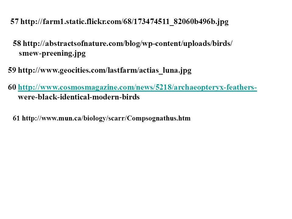 57 http://farm1.static.flickr.com/68/173474511_82060b496b.jpg 58 http://abstractsofnature.com/blog/wp-content/uploads/birds/ smew-preening.jpg 59 http://www.geocities.com/lastfarm/actias_luna.jpg 60 http://www.cosmosmagazine.com/news/5218/archaeopteryx-feathers-http://www.cosmosmagazine.com/news/5218/archaeopteryx-feathers- were-black-identical-modern-birds 61 http://www.mun.ca/biology/scarr/Compsognathus.htm