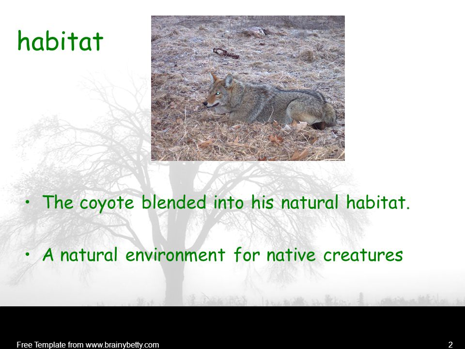 Free Template from www.brainybetty.com2 habitat The coyote blended into his natural habitat.