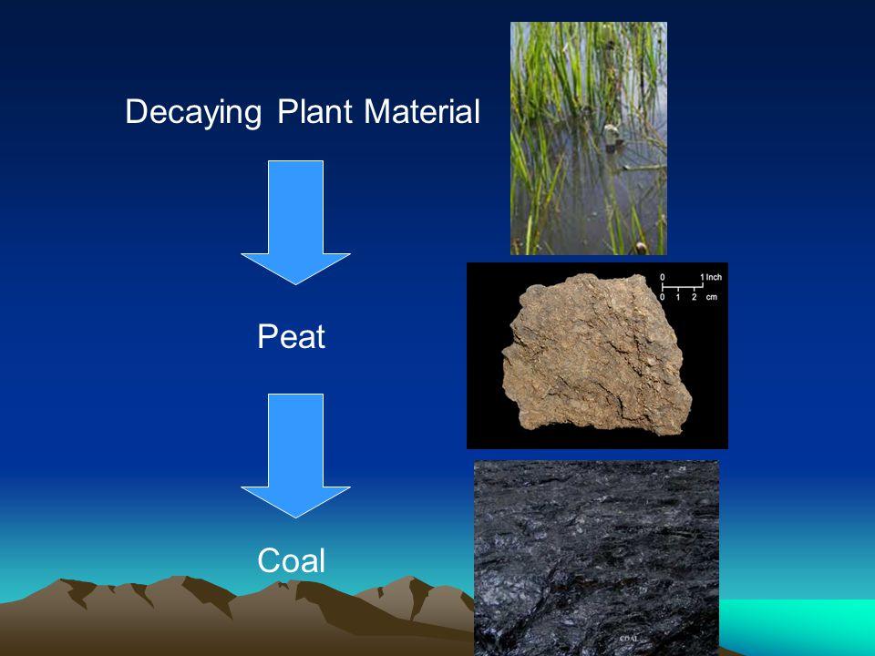 Decaying Plant Material Peat Coal