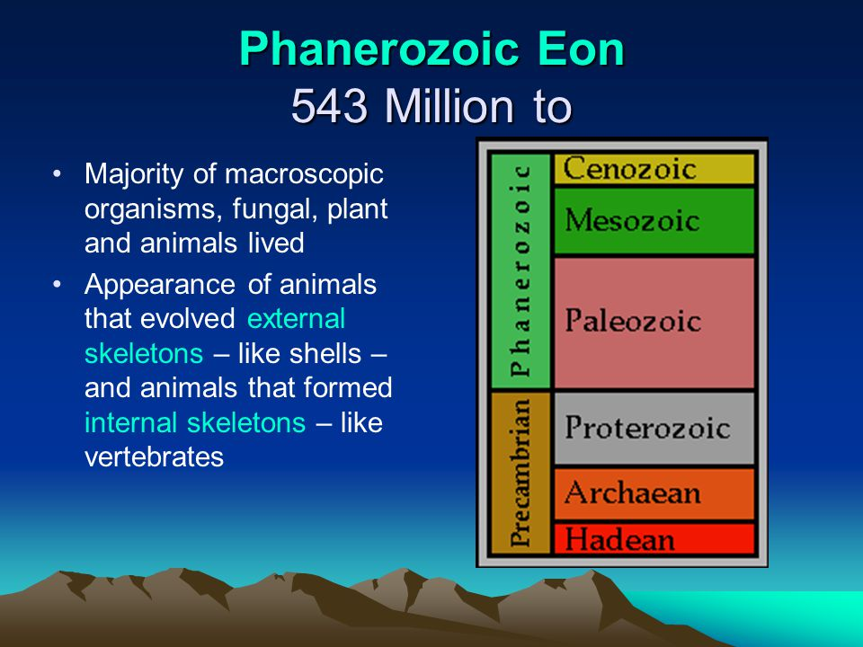 Phanerozoic Eon 543 Million to Majority of macroscopic organisms, fungal, plant and animals lived Appearance of animals that evolved external skeleton