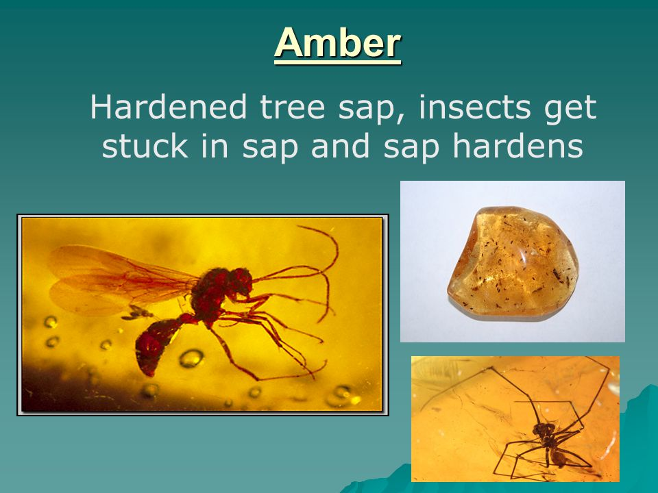 Amber Hardened tree sap, insects get stuck in sap and sap hardens