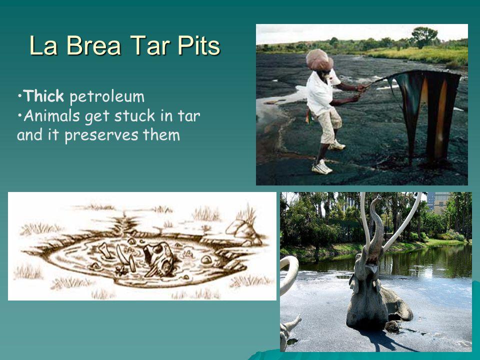 La Brea Tar Pits Thick petroleum Animals get stuck in tar and it preserves them