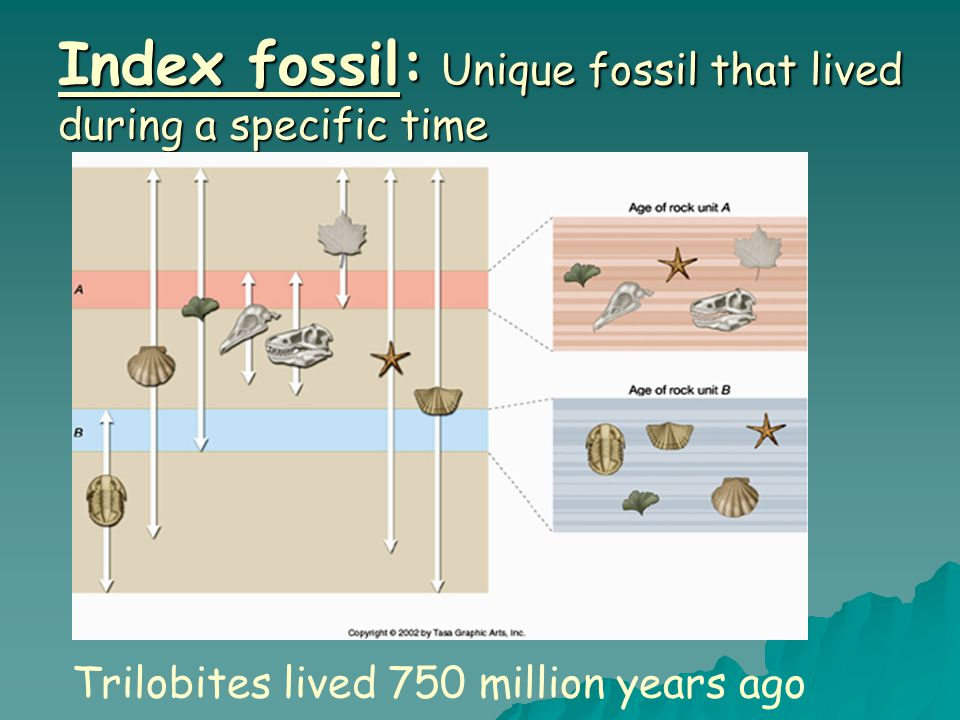 Index fossil: Unique fossil that lived during a specific time Trilobites lived 750 million years ago