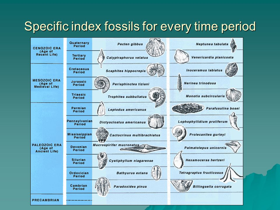 Specific index fossils for every time period