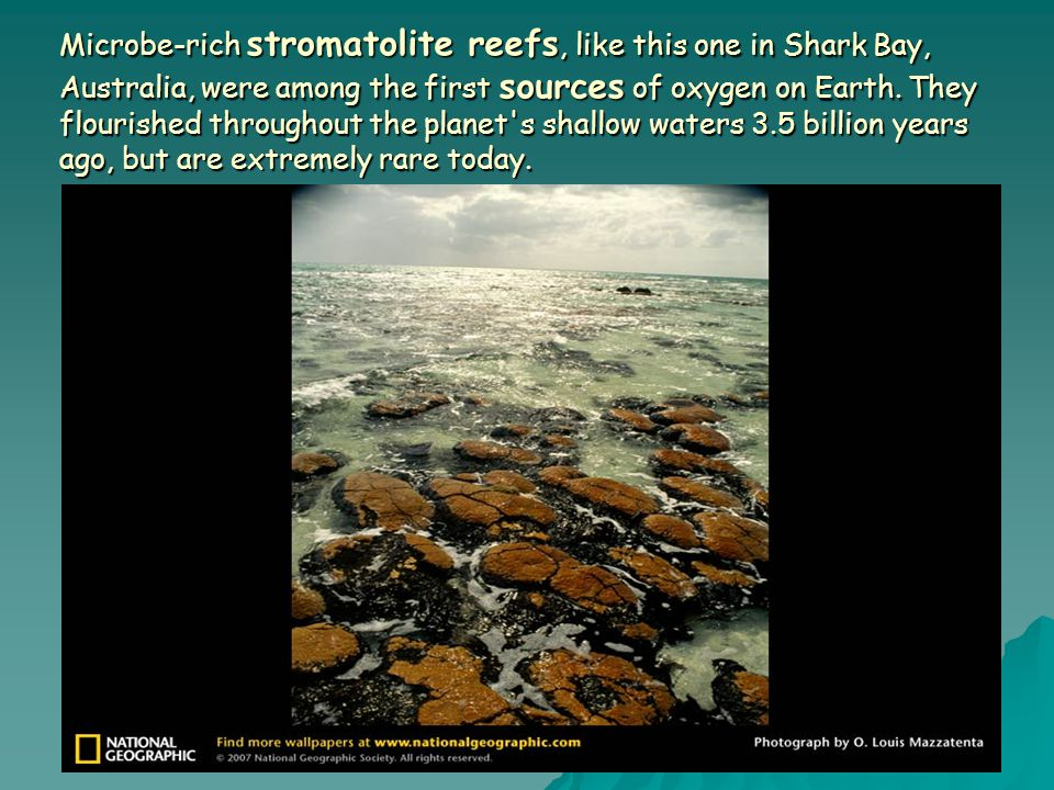 Microbe-rich stromatolite reefs, like this one in Shark Bay, Australia, were among the first sources of oxygen on Earth.