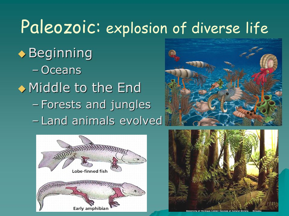 Paleozoic: explosion of diverse life  Beginning –Oceans  Middle to the End –Forests and jungles –Land animals evolved