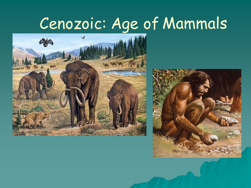 Cenozoic: Age of Mammals