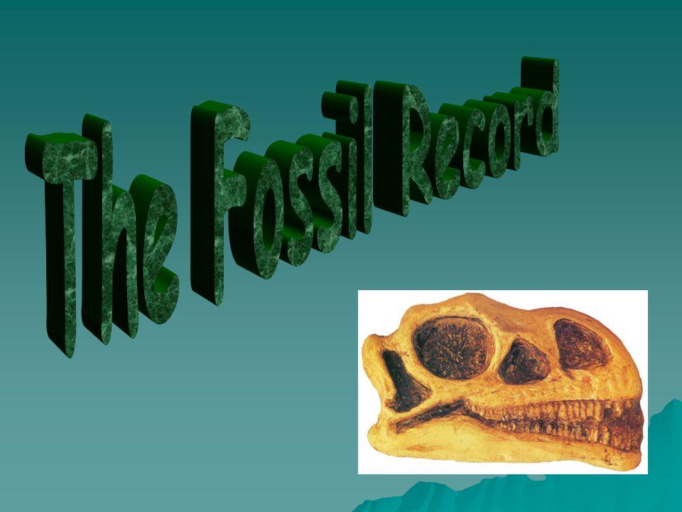Paleontology  The study of fossils.